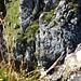 Scharte Fulfirstköpfe / Chli Fulfirst. Es ist da recht steil und es gibt wenig gute Standplätze, daher sieht man die Scharte nicht so richtig. Stein im Hintergrund = Fulfirstköpfe, Gras im Vordergrund = Chli Fulfirst.