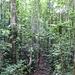 Im Primaerwald des Yachana Reservats