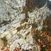 Man hat praktisch den ganzen Steig durchgehend im Blick (das oberste, hellere Felsband)
