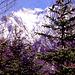 Karwendel mit [http://www.hikr.org/tour/post29159.html Westl. Karwendelspitze] vom Weiterweg Lautersee - Kranzberglift