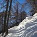 Aufstieg durch lichten Lärchenwald nach Brüsoo