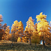 goldener Herbst, 1
