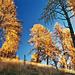 goldener Herbst, 2