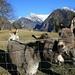 Curios donkeys