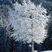so schön ist dieser Baum .... also noch ein Foto.....