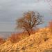 Herbststimmung im Winter