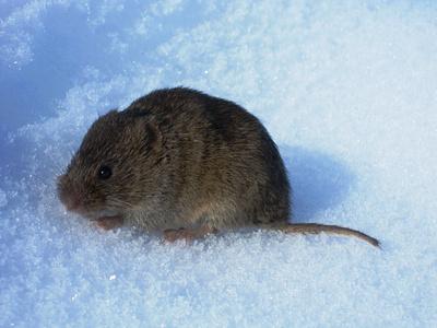 Kaum zu glauben, die Maus liess mich bis auf wenige Zentimeter rankommen. Aber zwei Sekunden nach dieser Aufnahme war sie weg...