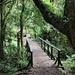 Il sentiero attraversa la foresta pluviale