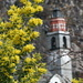 the church tower of Verscio (in the back) and a nicely blooming tree