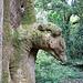 Schildkrötenbaum