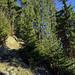 Schöner Aufstieg durch den Wald, könnte auch im März so aussehen...