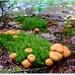 Mici ciupercute