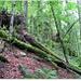 Cararea spre Cascada Saritoarea Iedutului