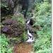 Paraul la iesirea in drum venind de la cascada Saritoarea Iedutului