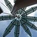Eine der bekannten Tessiner Palmen