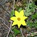 Unbekannte aber schöne Blüte