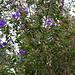 Im Botanischen Garten von Quito