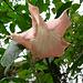 Ebenfalls im Botanischen Garten