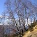 zwischen Dröi und Monte di Comino