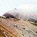 Die Meilerhütte im Abstieg ins Bergleintal