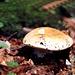 Pilz im Leutaschtal<br />ist er essbar ?