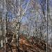 Der Weg führt durch einen herrlichen Buchenwald<br />El camino transcuro en un bosque hermoso de haya