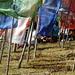 Jeunes pique-niquant au milieu des drapeaux à prières