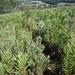 Letzter Teil des Abstiegs durch hohe Vegetation