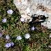 Blumen am Weg