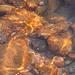 Goldadern im Bodensee?
