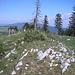Gipfel des Mont d'Amin 1417m