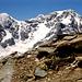 Geröll prägt den Aufstieg zur Schöntaufspitze. Im Schutz der Steine recken sich ein paar Blümchen der Sonne entgegen.