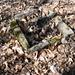 Feuerstelle für Holzarbeiter - da köchelte die Polenta