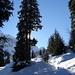 Der Sonne entgegen: Aufstieg durch den märchenhaft verschneiten Wald Richtung Urdenalp