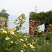 Ruinen und Blumen