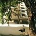 Olgiate Comasco: chi si è adattato, l'albero o il condominio?