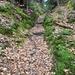 auf der gesamten Wanderung treffen wir hübsche Wege an; hier im ersten Aufstieg ab Zollbrück sogar eine kleine Hohle Gasse