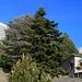 das Haus des Griechischen Alpenvereins