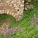 Mystras - Ruinen und Blumen