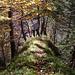 Herbstliche Stimmung im Aufstieg. Gaudenz auf dem Grat im unteren Teil der Route.