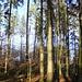 Irgendwo im Wald beim Hörnli