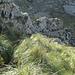 der Weg führt durch hohes Dissgras und weiter an der Nordwand des Puig Roig entlang