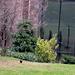La sala dedicata ad Alberto Giacometti vista dall'esterno.