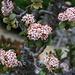 Jardin Exotique.<br /><br />Der Geldbaum oder Pfennigbaum (Crassula ovata). Heimisch ist er im südlichen Afrika von Namibia bis Madegaskar.