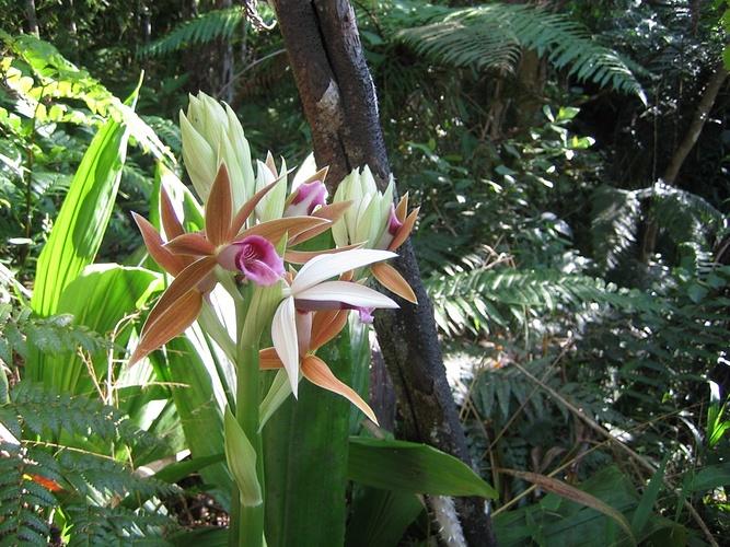 50 cm gro e orchideen finden sich am wegesrand fotos. Black Bedroom Furniture Sets. Home Design Ideas