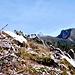 Am Übergang vom Nebelhorn (2224m) zum Grundkopf (2062m) Hinten (Hochvogel (2593m) u. Schochen (2100m)