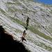 Gelber Eisenhut beim Abstieg vom Nebelhorn (2224m)<br />ebenfalls sehr giftig