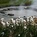 Wollgras vor brodelnden Quellen (Foto: [U sglider])