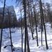 im lichten Wald; links der Kleine Watzmann