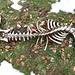 Das Skelett eines Hirsch oder einer Hirschkuh